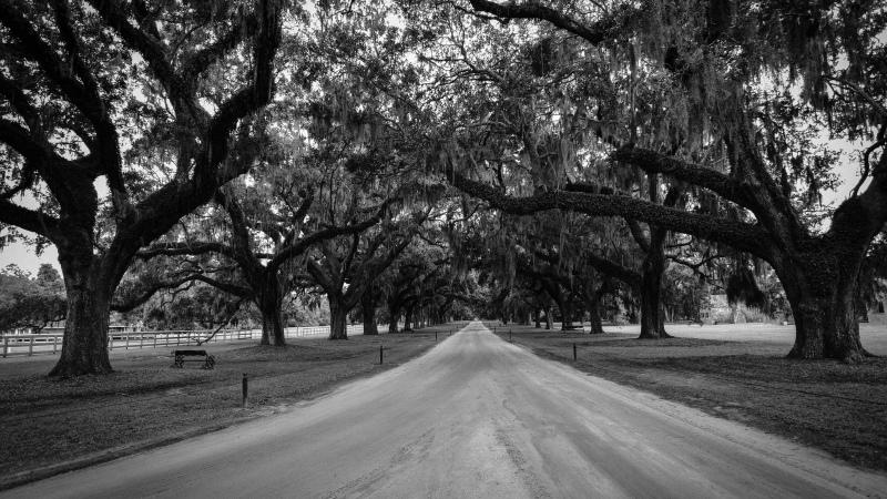 Charleston Plantation Road |Coffeepuss